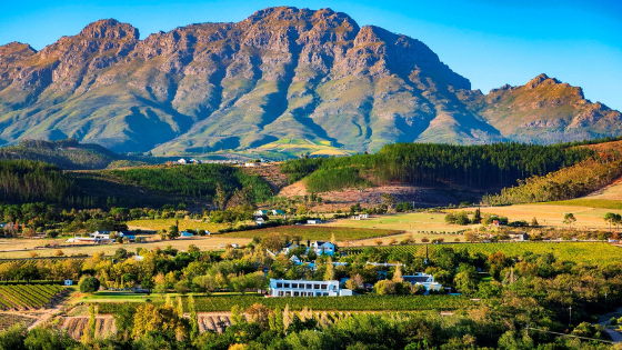 The Stellenbosch Wine Route – Paving SA's Wine Tourism Sector For 50 Years