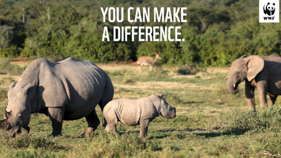 WWF South Africa Launches Drive To Encourage South Africans To Build Back Better